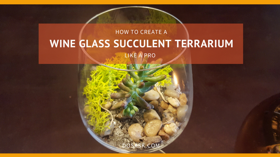 How to create a wine glass succulent terrarium title image